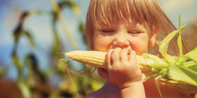 young girl eating organic corn on the cob