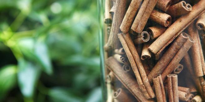 Cinnamon vs. Cold Season